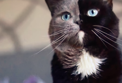 A Cat With Two-Coloured Face Becomes Dad To Kittens In Each Of His Colours