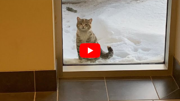 Shivering Stray Cat Shows Up At The Fire Station And Asking For Help