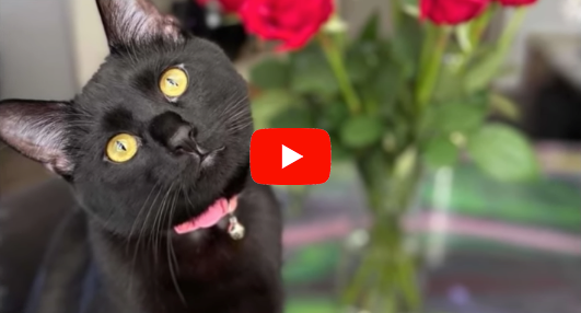 This Cat Gives Priceless Reaction When She Reads Sign Her Owner Put Up.