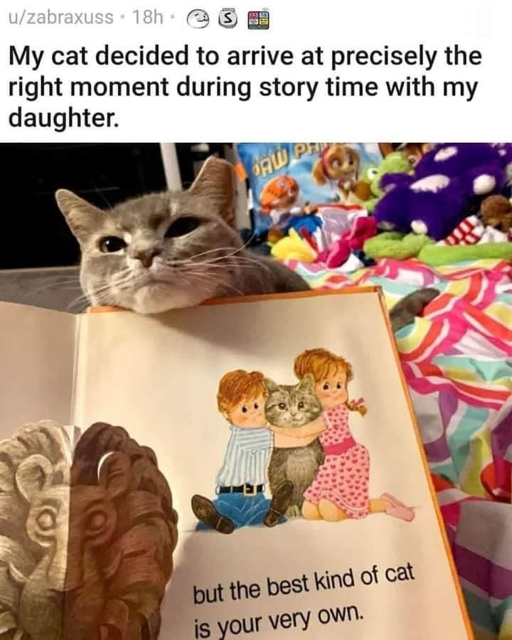 My cat decided to arrive at precisely the right moment during story time with my daughter.