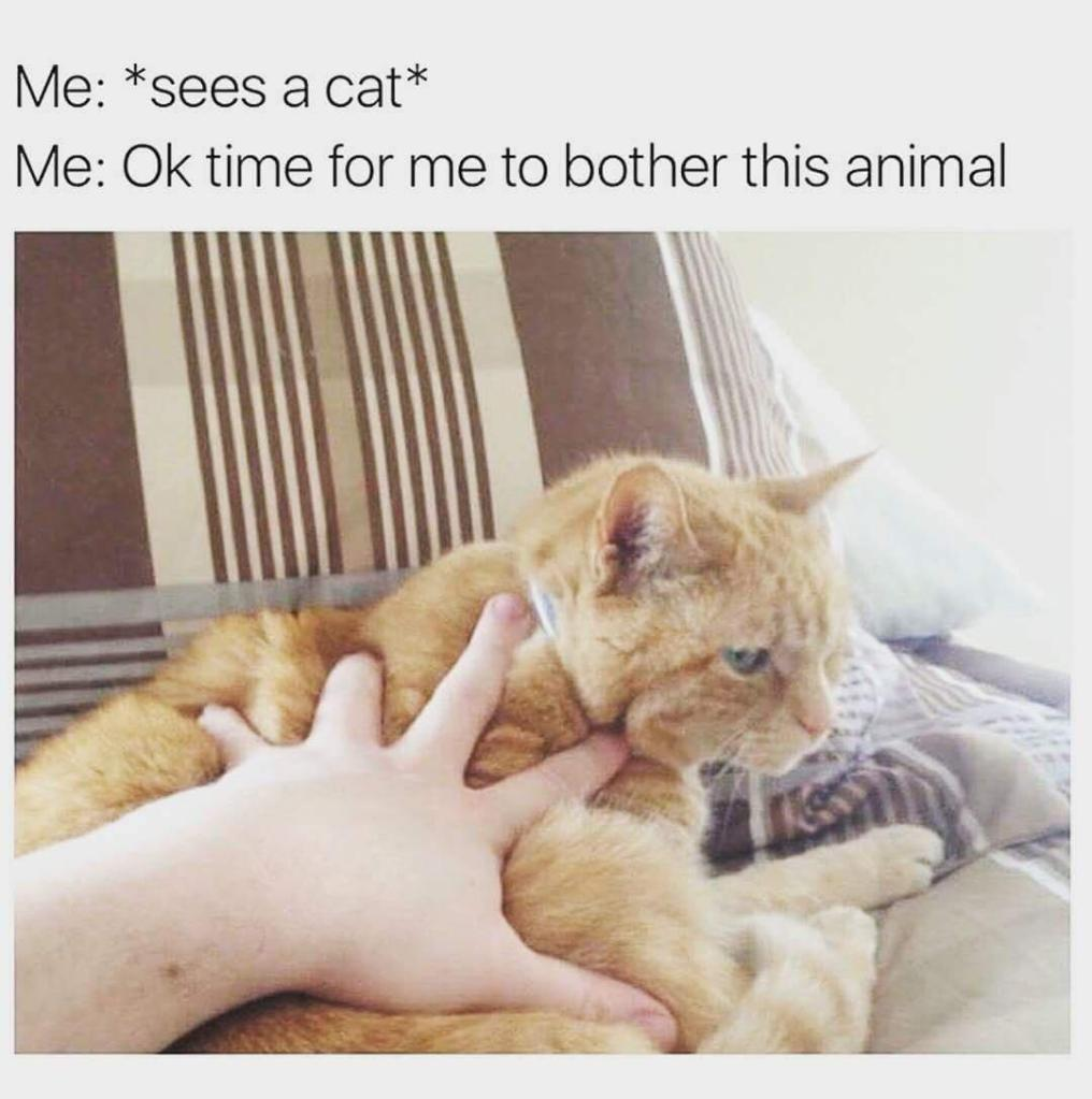 """Me:""""sees a cat""""
