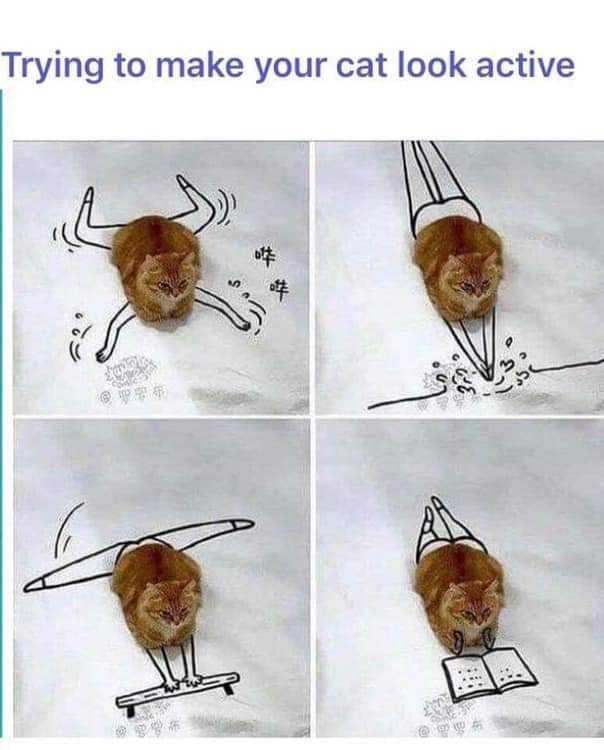 Trying to make your cat look active