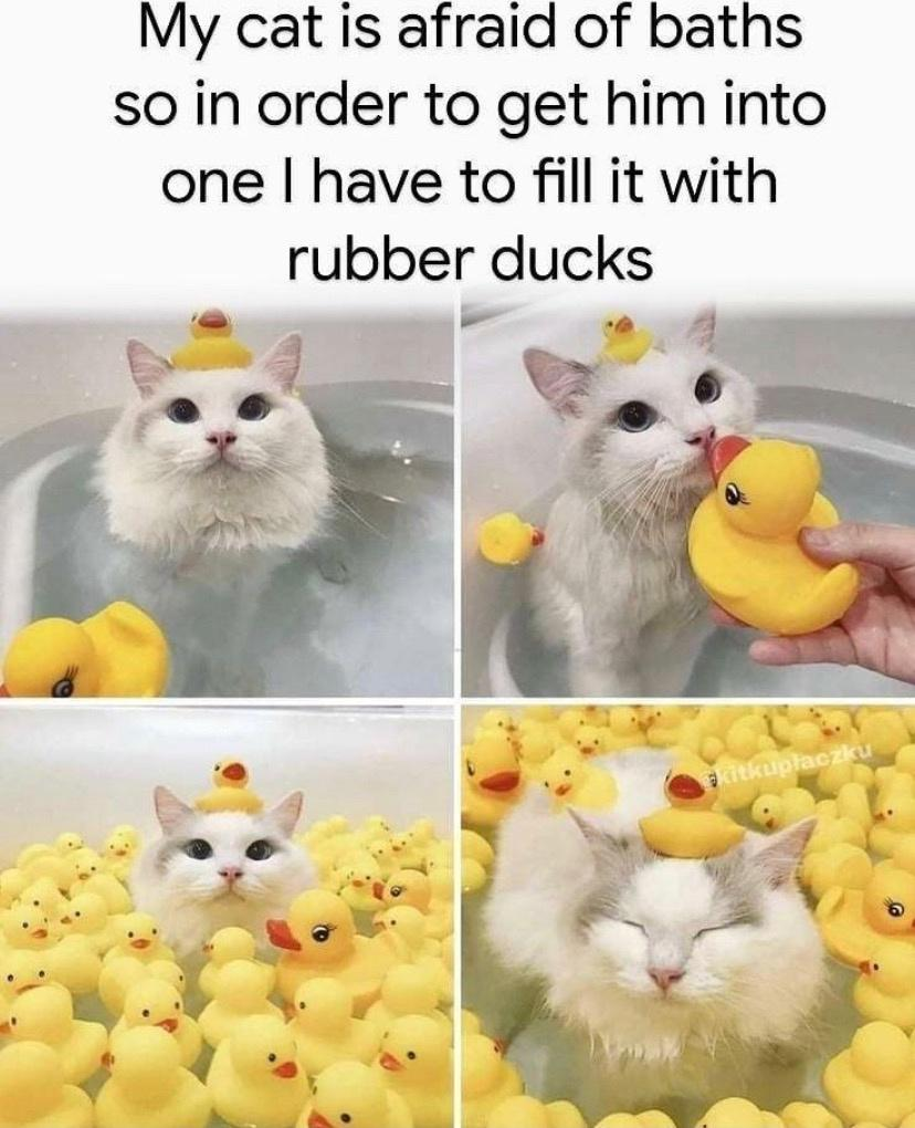 My cat is afraid of baths so in order to get him into one I have to fill it with rubber ducks.