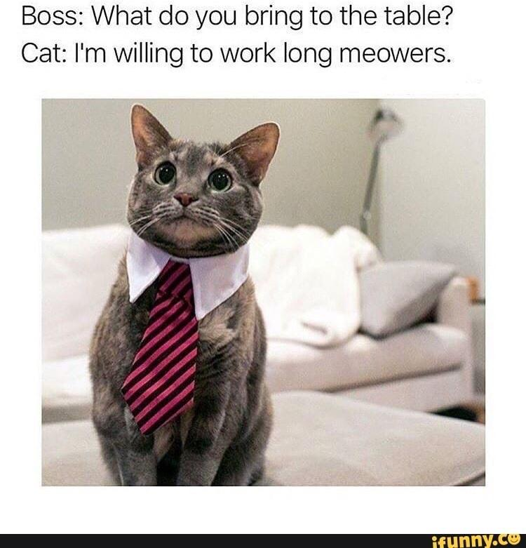 Boss: what do you bring to the table? Cat: I'm willing to work long meowers.