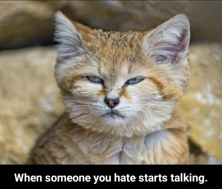 When someone you hate starts talking.