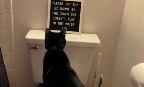 Please put the lid down so the damn cat doesn't play in the water lol